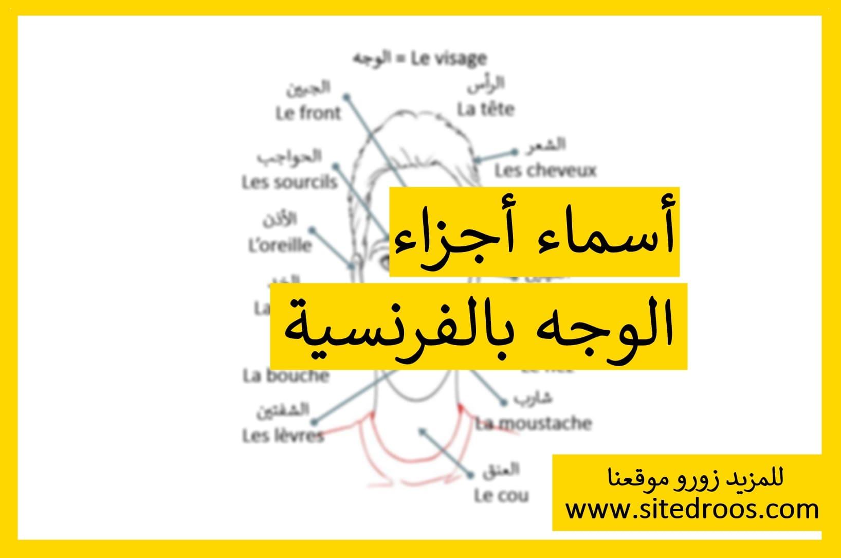 أسماء أجزاء الوجه بالفرنسية