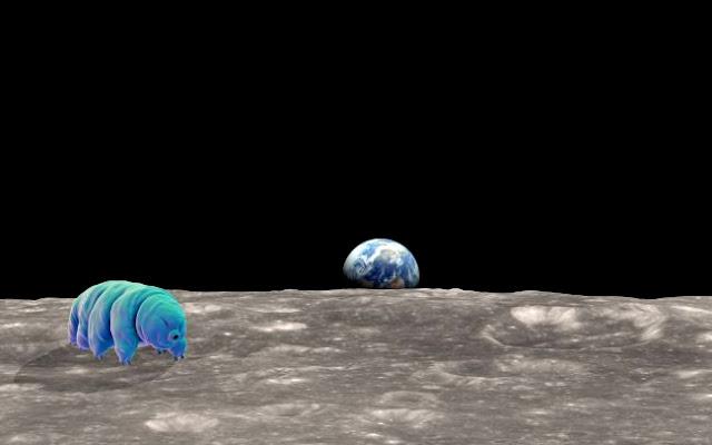 tardigrados na Lua