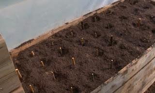 Stump Carrots box