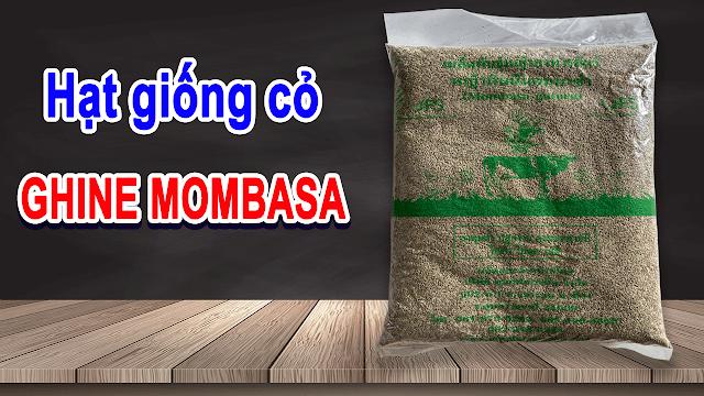 Mua hạt giống cỏ ghine mombasa ở đâu