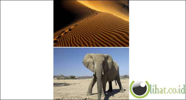 Namib (Namibia)