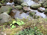 Fiddleheads, Sengan-en Garden - Kagoshima, Japan