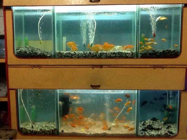 Kontruksi Aquarium