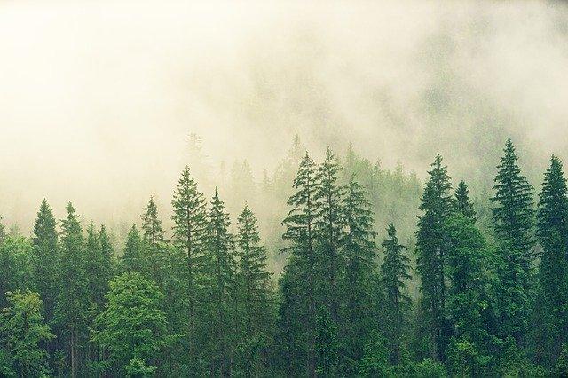 ما هو الفرق بين الغابة والغابات الاستوائية المطيرة؟