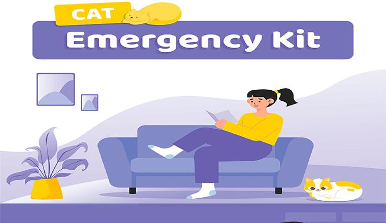Cat Emergency Kit  #infographic
