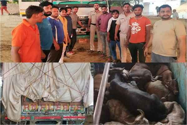 faridabad-hodal-news-police-and-gaurakshak-save-cow-life-from-kasaai