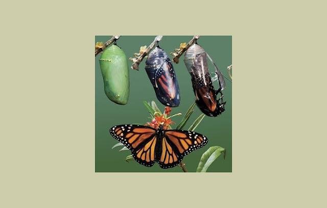 Pengertian Metamorfosis, Jenis Metamorfosis, Fungsi Metamorfosis, Proses Metamorfosis
