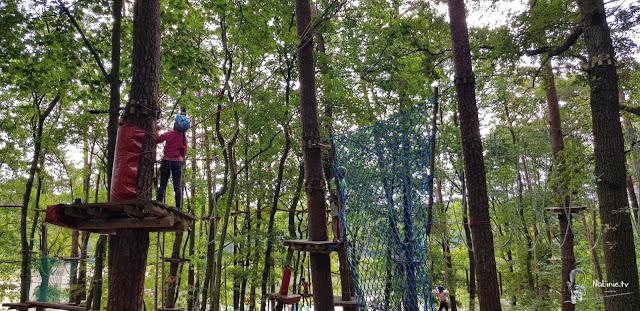 wyzwania na drzewach park linowy