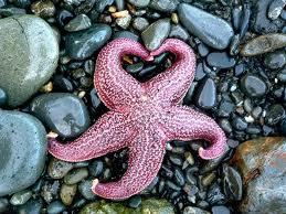 Bir Deniz Yıldızı Hikayesi 5