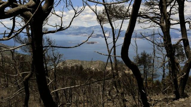 Πρόταση  της Αγωνιστικής Συνεργασίας Πελοποννήσου για την προστασία των καμένων δασών
