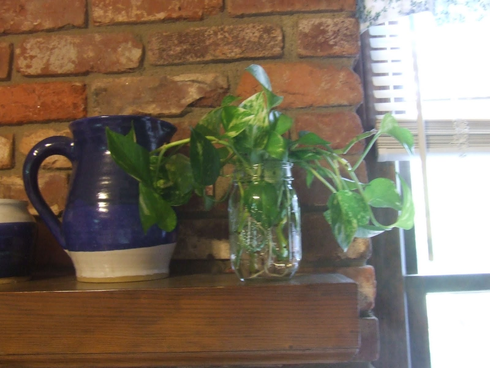 Small Water Garden Needs No Electricity Just Place Pots: My Blue Cottage: Pothos
