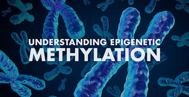 Understanding Epigenetic Methylation | El Paso, TX Chiropractor