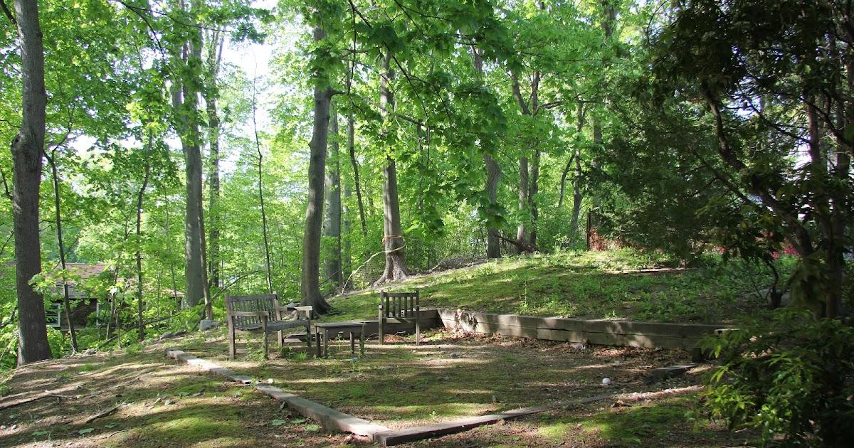 Gardening and Gardens: Backyard Renovation - Part 1: Tree ...