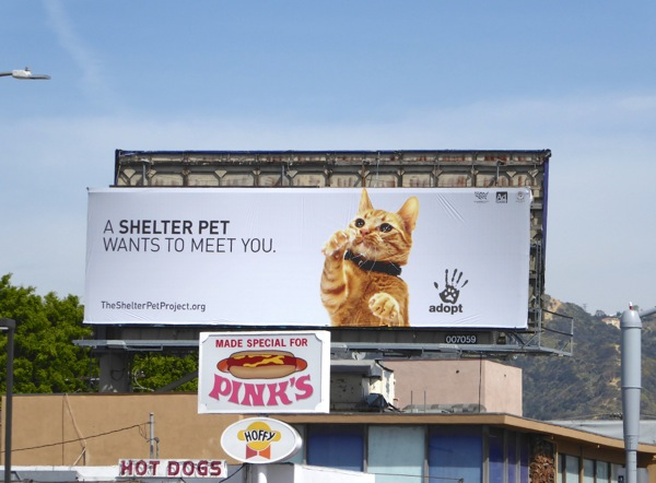 Shelter pet project cat billboard
