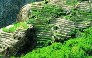 مدرجات الجبل الأخضر في سلطنة عُمان