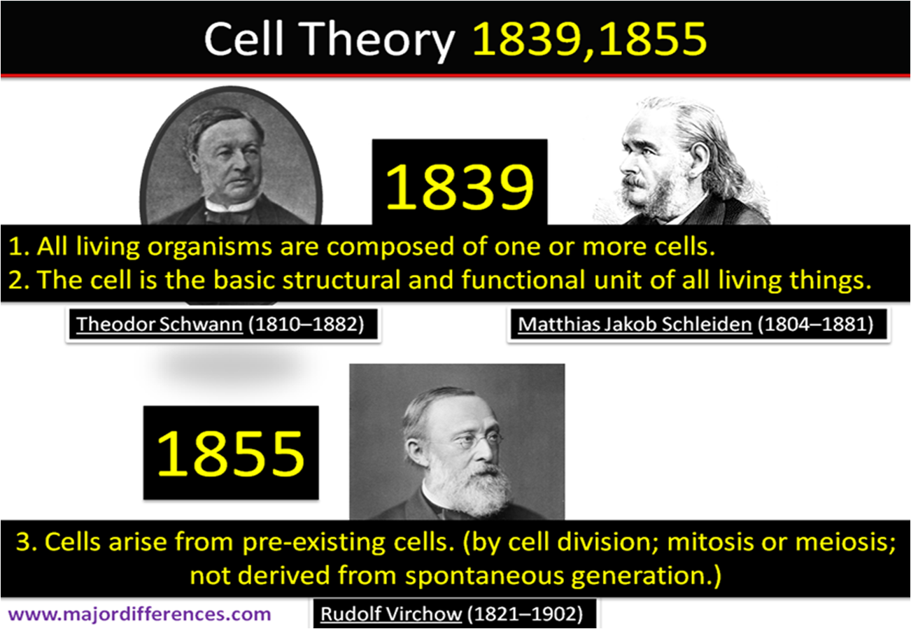 Difference between Cell Theory and Modern Cell Theory