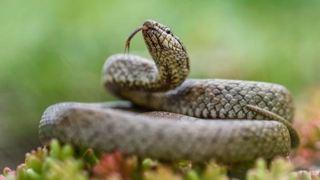 Takut kepada ular