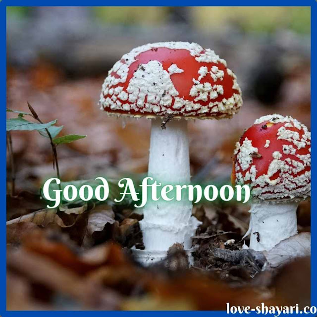 Good afternoon dear