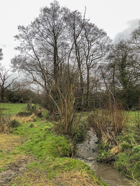 Alder Brook, Walshes Park, Crowborough, 2 April 2018.
