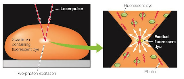Two-photon excitation microscopy Simultaneous absorption of two photons is required to excite the fluorescent dye
