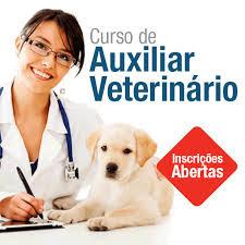 Curso Online de Auxiliar Veterinário
