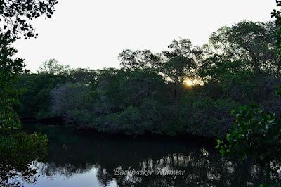Sore hari di Hutan Mangrove Taman Hutan Raya Ngurah Rai Bali - Backpacker Manyar