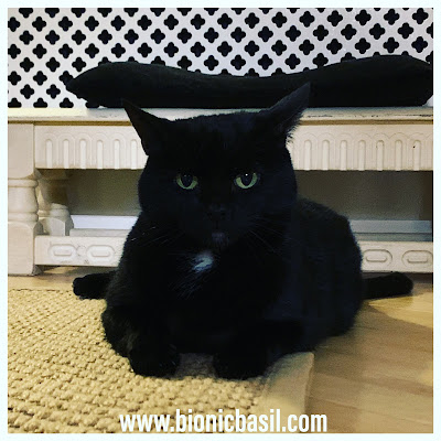 Black Cat Appreciation Day 2020 with Parsley Sauce ©BionicBasil® Idiots Will be Eaten Cat