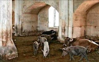 Miris Sekali! Masjid Bersejarah di Azerbaijan Malah Dialihfungsikan Jadi Kandang Babi