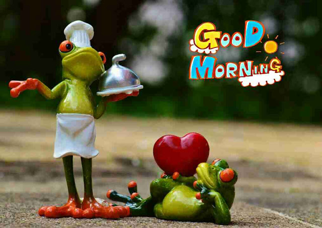 very funny good morning image of cute cook frog