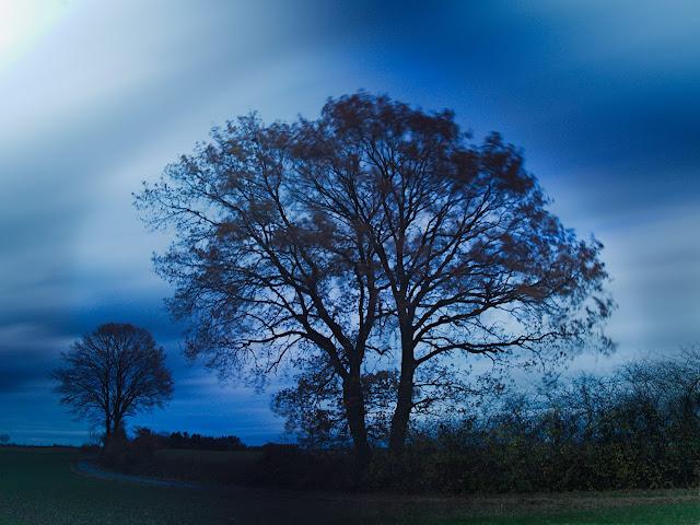 Zwei Bäume vor dunklen Wolken.
