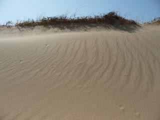 Національний природний парк «Олешківські піски». Херсонська обл.