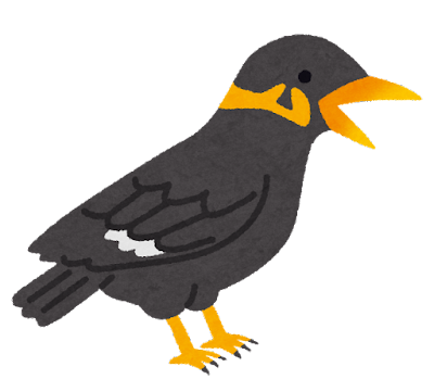 九官鳥のイラスト
