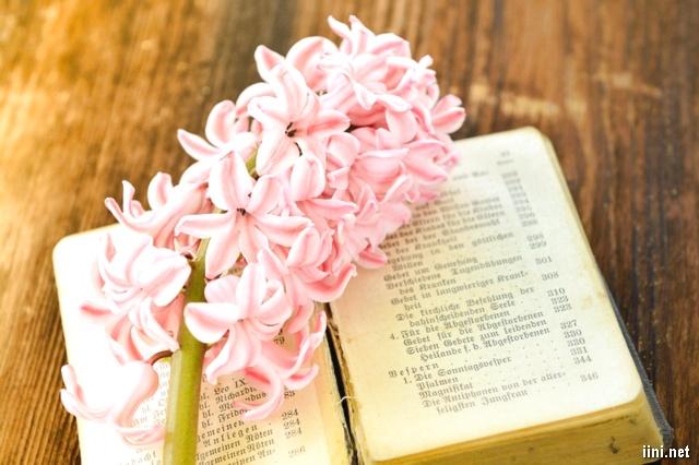 ảnh cành hoa bên sách