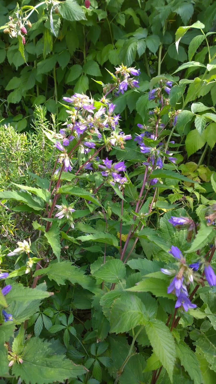 Achimsgarten - der Selbstversorger- und Garten-Blog: Aus ...