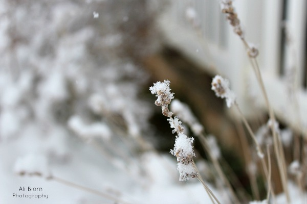 Learning Manual Mode for Beginning Photographers Snow photo with shallow depth of field