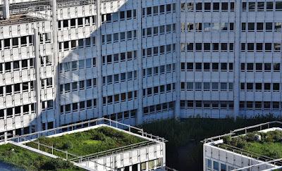 tetto verde-tetto giardino-tetto a giardino pensile