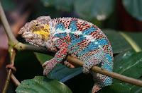 Flora Dan Fauna Madagaskar