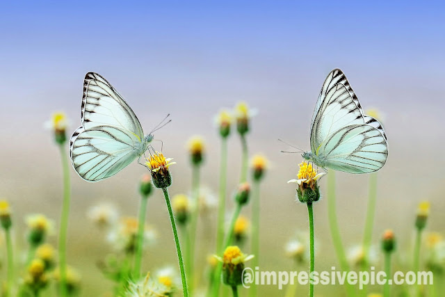 Butterfly flying on flowers