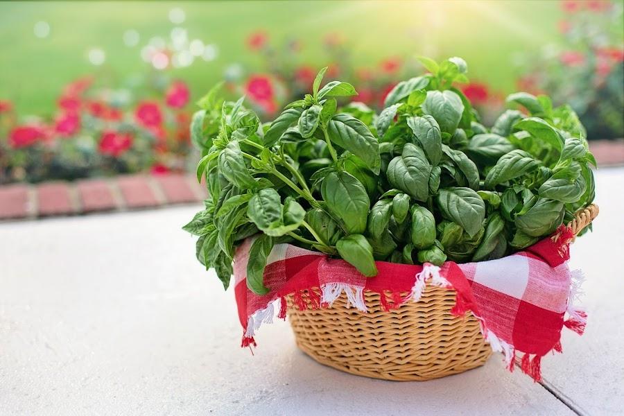Plantas medicinales para combatir el dolor por la artritis