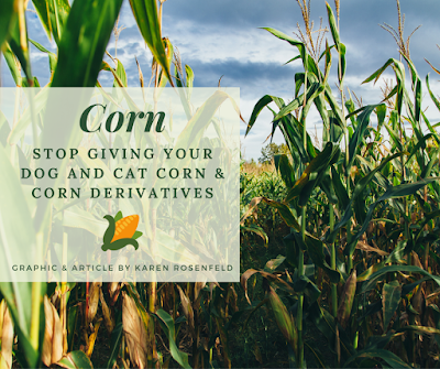 corn and corn derivatives are bad for your dog and cat