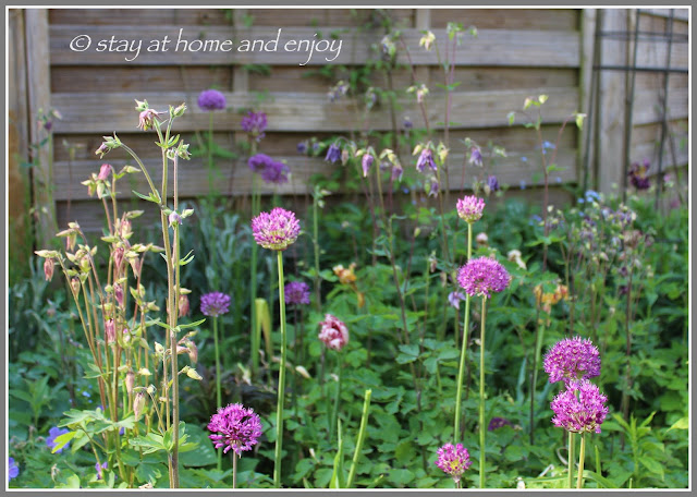 Frühling - Allium - Akelei - stay at home and enjoy