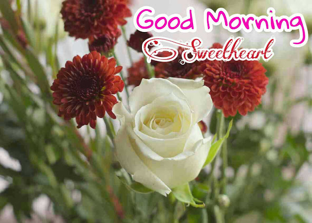 Good morning Images with White Rose flower