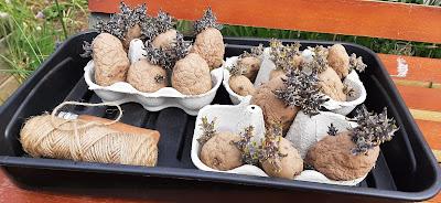 Chitter potatoes