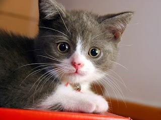 Jual jual kucing munchkin,  Harga jual kucing munchkin,  Toko jual kucing munchkin,  Diskon jual kucing munchkin,  Beli jual kucing munchkin,  Review jual kucing munchkin,  Promo jual kucing munchkin,  Spesifikasi jual kucing munchkin,  jual kucing munchkin Murah,  jual kucing munchkin Asli,  jual kucing munchkin Original,  jual kucing munchkin Jakarta,  Jenis jual kucing munchkin,  Budidaya jual kucing munchkin,  Peternak jual kucing munchkin,  Cara Merawat jual kucing munchkin,  Tips Merawat jual kucing munchkin,  Bagaimana cara merawat jual kucing munchkin,  Bagaimana mengobati jual kucing munchkin,  Ciri-Ciri Hamil jual kucing munchkin,  Kandang jual kucing munchkin,  Ternak jual kucing munchkin,  Makanan jual kucing munchkin,  jual kucing munchkin Termahal,  Adopsi jual kucing munchkin,  Jual Cepat jual kucing munchkin,