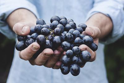 Selain itu banyak masyarakat yang menjadikan buah anggur sebagai cemilan 15+ Gambar Buah Anggur Segar