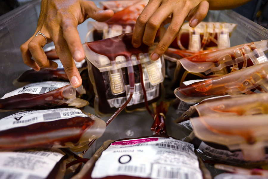 hands looks through bags of donated blood