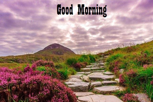 good morning scenery pic