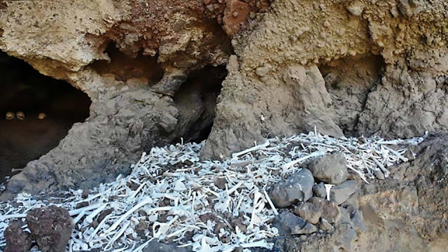 Remains of 72 pre-Hispanic Guanche natives found on Gran Canaria island