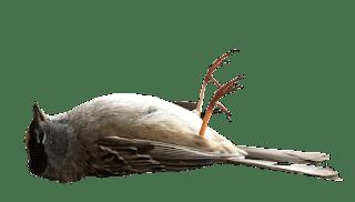 تعلم تشخيص أمراض طيورك مع تصحيح بعض المغالطات