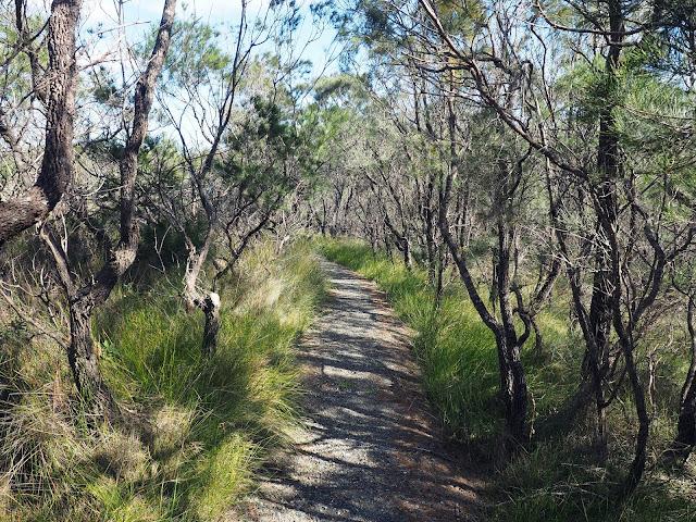 Diamond Head Loop Walk Rainforest Track